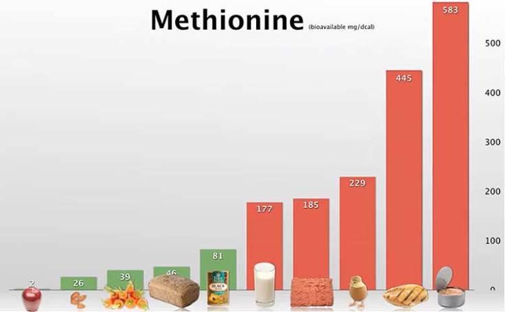 Methionine content in foods